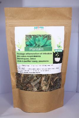 PLANTAIN (Plantago Major) – Feuilles